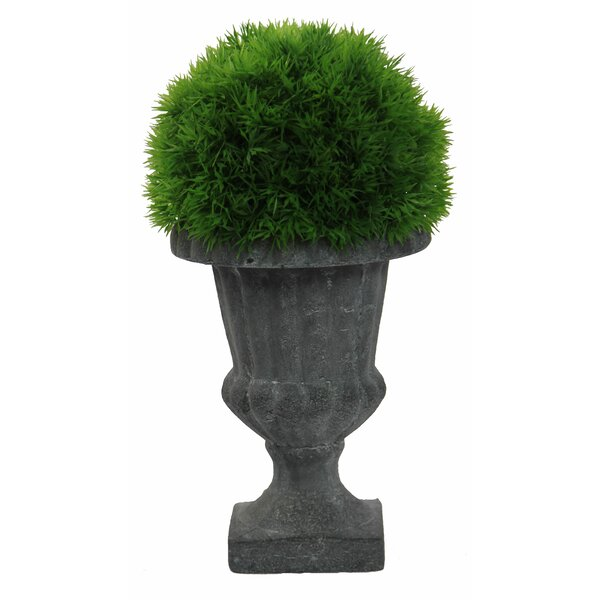 Faux Dill Floor Boxwood Topiary in Urn by Admired by Nature