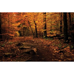 'Autumn Path' Photographic Print on Canvas by East Urban Home