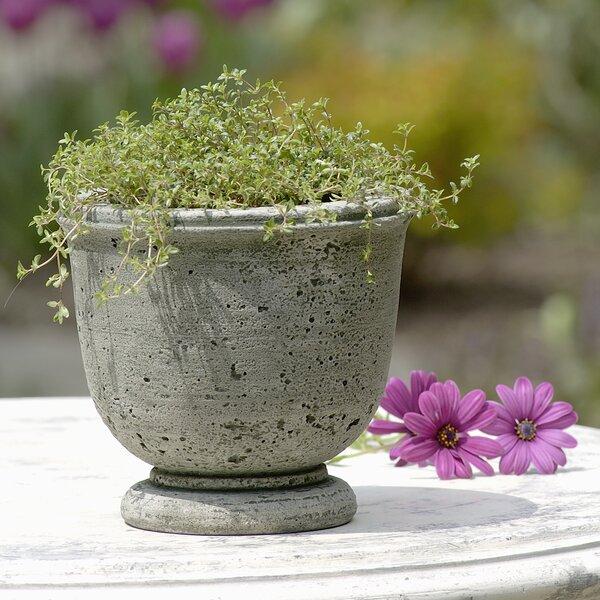 Derris Cast Stone Pot Planter by Ophelia & Co.