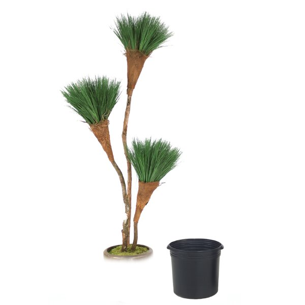 Grass Pom Pom Tree in Planter by Distinctive Designs
