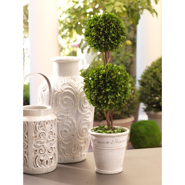 Maison de Provence Ball Boxwood Floor Topiary in Pot by Zodax