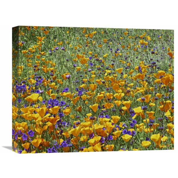 Nature Photographs California Poppy and Desert Bluebell Flowers, Antelope Valley, California Photographic Print on Wrapped Canvas by Global Gallery