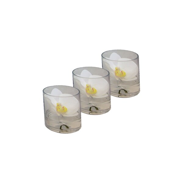 Phalaenopsis Orchid Floral Arrangement in Glass Vase (Set of 3) by Bloomsbury Market