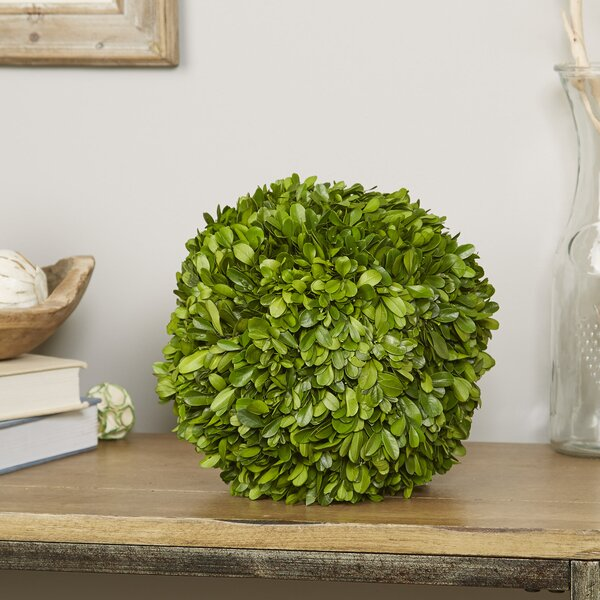 Preserved Greens Sphere Tree in Planter by Birch Lane™