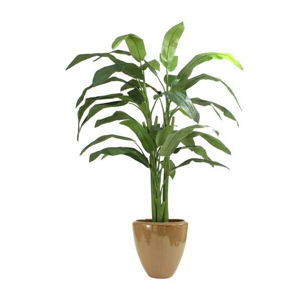 Heliconia Tree in Pot by Distinctive Designs