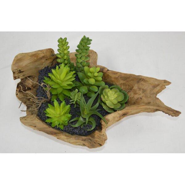 Desktop Succulent in Planter by Bloomsbury Market