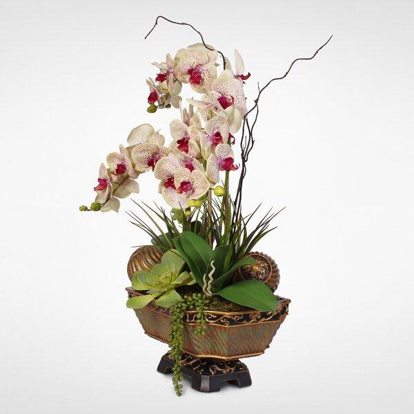 Green Beauty Phalaenopsis Orchids Desktop Centrepiece in Urn by Bloomsbury Market
