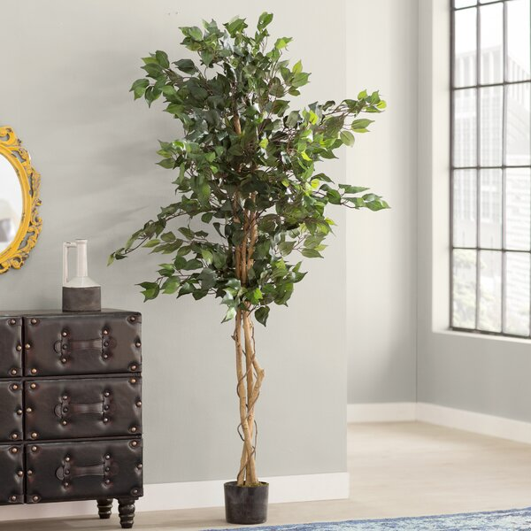 Ficus Silk Tree In Pot By Trent Austin Design.