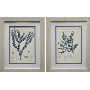 Nature Print I & III by Vision Studio 2 Piece Framed Graphic Art Set by Star Creations