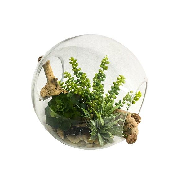 Desktop Succulents Plant in Decorative Vase by Bungalow Rose