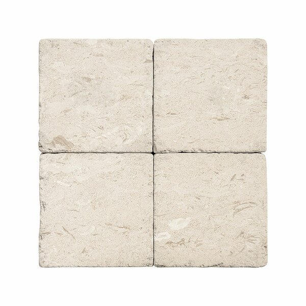 4 x 4 Limestone Field Tile in Fossil Stone by Parvatile