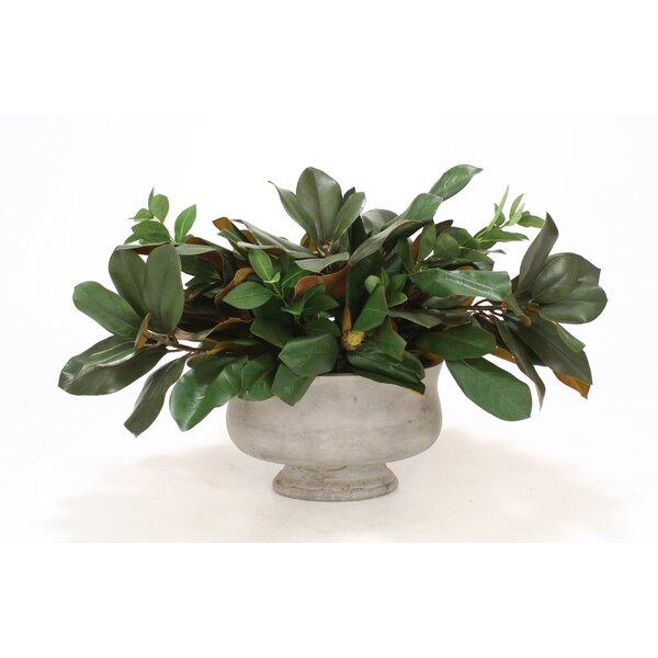 Magnolia Foliage Desk Top Plant in Urn by Distinctive Designs