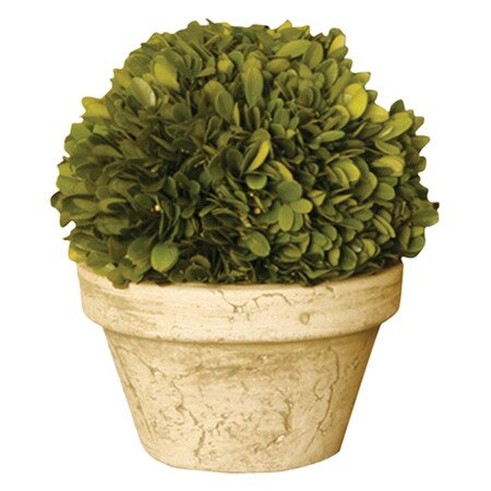 Preserved Potted Boxwood Topiary by Napa Home and Garden