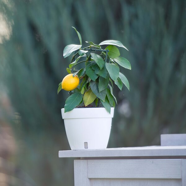 Asti Self-Watering Plastic Pot Planter by Santino