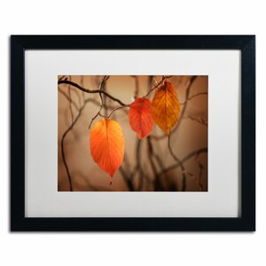Leaves after Leaves by Philippe Sainte-Laudy Framed Photographic Print by Trademark Fine Art