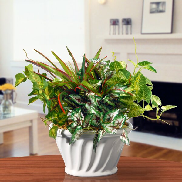 Potted Plant by National Tree Co.