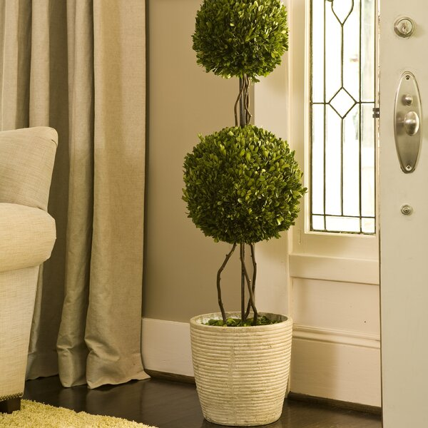 Preserved Boxwoods Double Sphere Topiary in Pot by One Allium Way