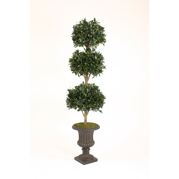 Sweet Bay Laurel Triple Ball Topiary in Urn by Distinctive Designs