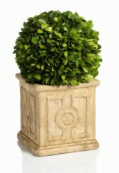 Cinzia Preserved Boxwood Topiary in Pot by Zodax