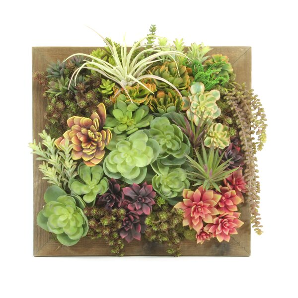 Wall Hanging Succulent by Dalmarko Designs
