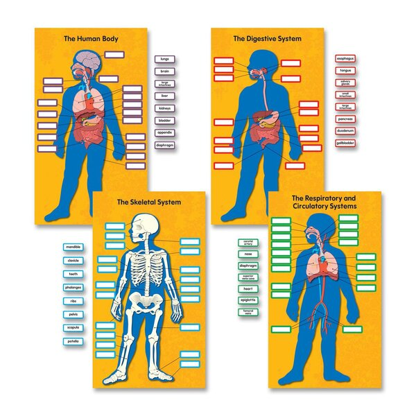 Human Body Bulletin Board Cut Out Set by Carson-Dellosa Publishing
