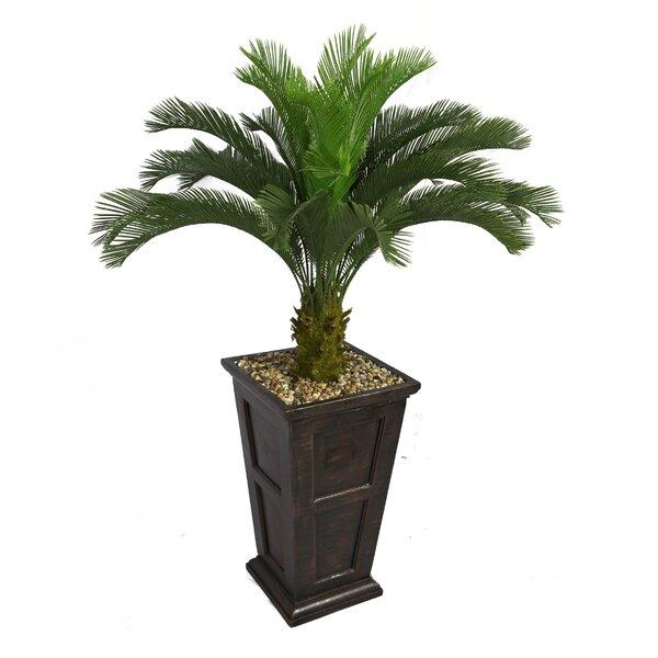 Tall Cycas Palm Tree in Planter by Bayou Breeze