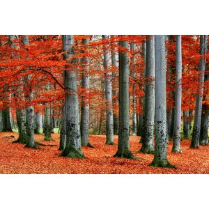 Autumn Forest 2 Photographic Print on Canvas by 3 Panel Photo
