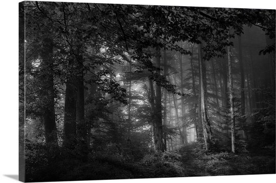 See Into the Trees by Norbert Maier Photographic Print on Canvas by Canvas On Demand