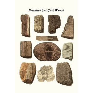 'Fossilized Petrified Wood' by James Parkinson Graphic Art by Buyenlarge