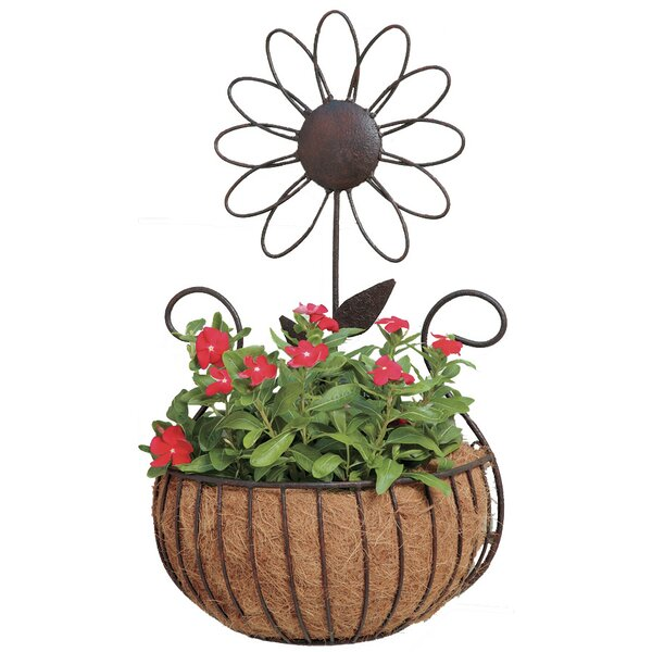 Daisy Iron Wall Planter by Deer Park Ironworks