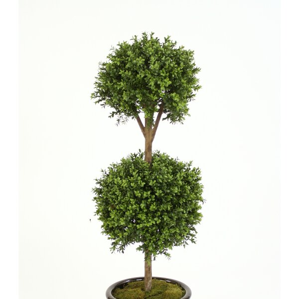 Boxwood Double Ball Topiary in Planter by Distinctive Designs