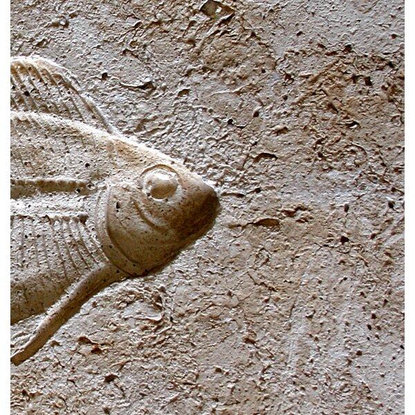 6 x 6 SeaStone Cement Fish Head Fossil Impression Bevel Edge Medallion Tile in Buff by Matrix-Z