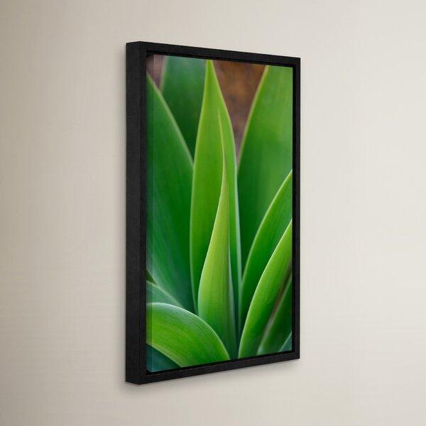 Sensuous Succulent Framed Graphic Art by Latitude Run