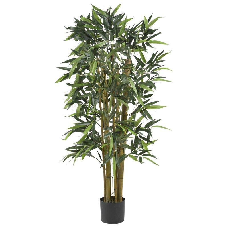 Biggy Bamboo Tree in Planter