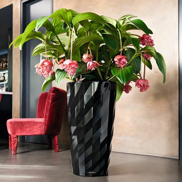 Premium Series Pot Planter by Lechuza