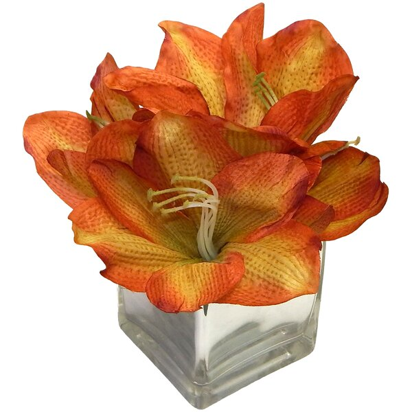 Amaryllis Centerpiece by Charlton Home