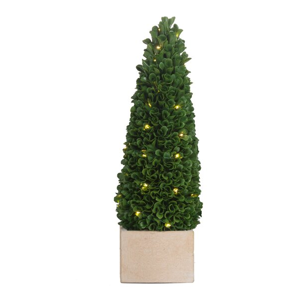 Pre-Light Boxwood Cone Topiary in Pot by Gracie Oaks