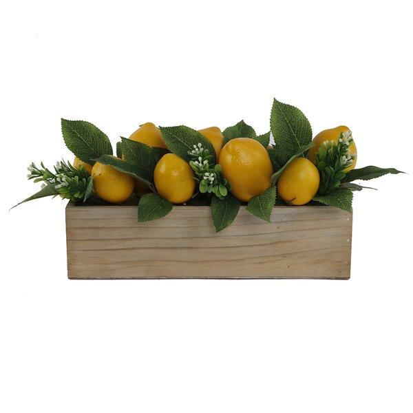 13 Beaded Lemons Desktop Succulent Plant in Wood Ledge MD by August Grove