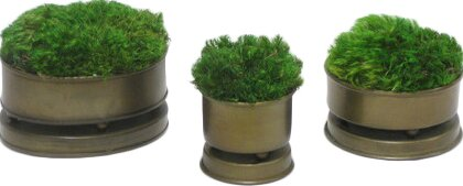3 Piece Moss Container Set by Bougainvillea