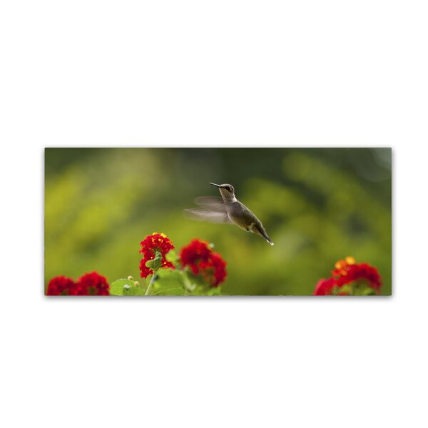 Happy Little Hummingbird by Kurt Shaffer Photographic Print on Wrapped Canvas by Trademark Fine Art