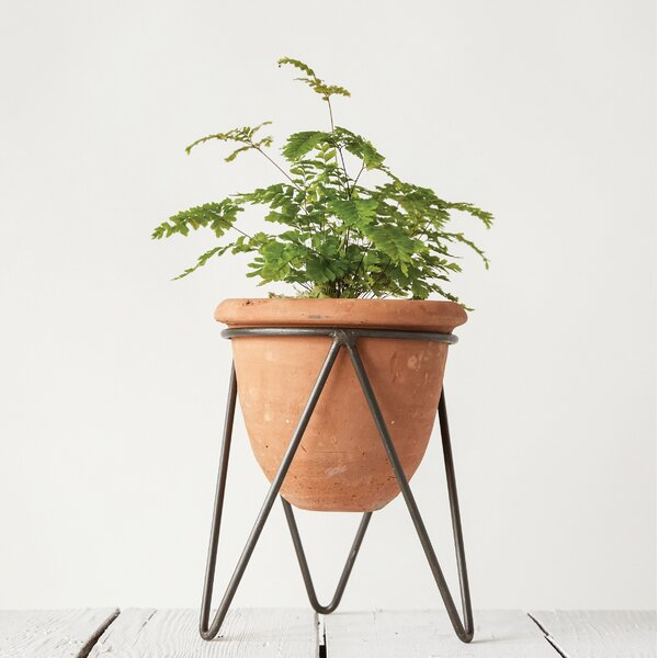 Tarracotta Floor Foliage Plant in Pot by Creative Co-Op