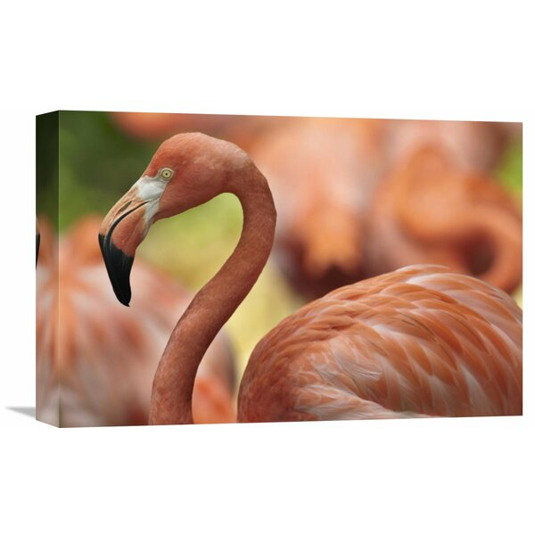 Nature Photographs Greater Flamingo, Jurong Bird Park, Singapore by Tim Fitzharris Photographic Print on Wrapped Canvas by Global Gallery