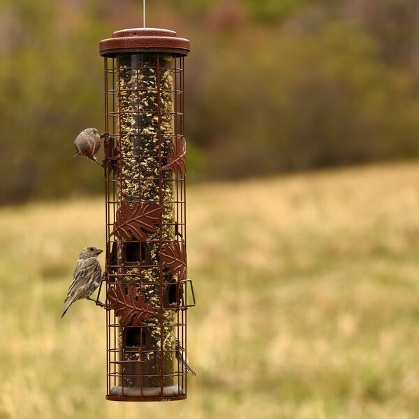 Squirrel-Be-Gone Tube Bird Feeder by Perky Pet