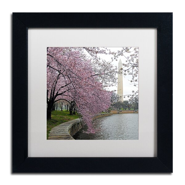 Washington Blossoms by CATeyes Framed Photographic Print by Trademark Fine Art