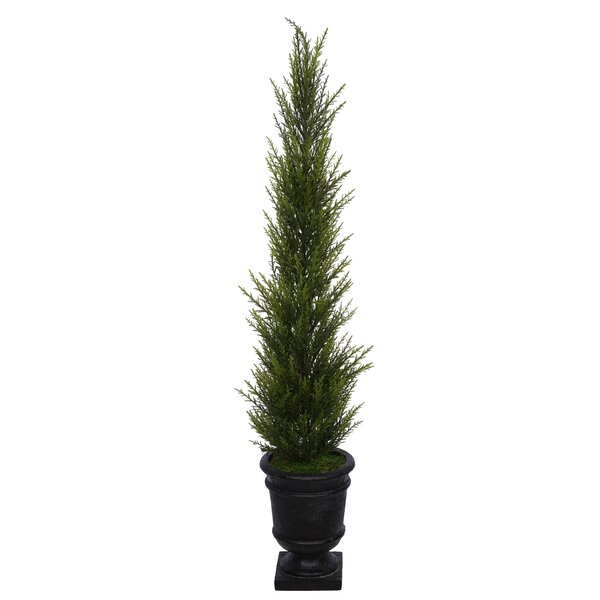 Artificial Desktop Cedar Topiary in Urn by Charlton Home