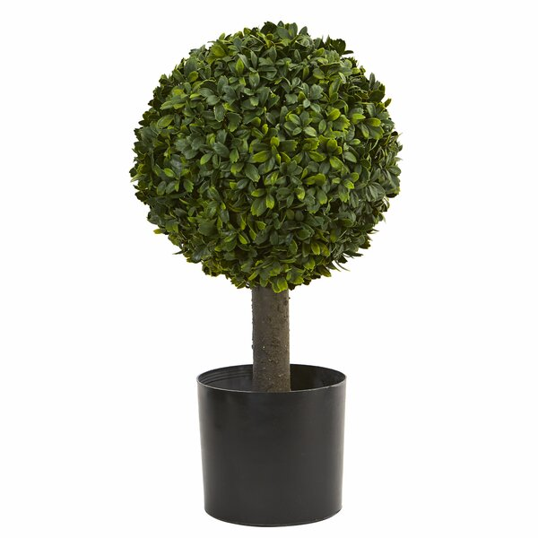 21 Boxwood Topiary by Alcott Hill