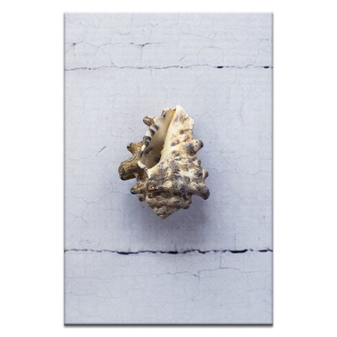 Wild Vasum Mollusk by Emma Relph Photographic Print Wrapped on Canvas