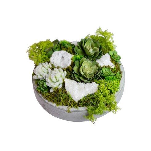 Succulents in Concrete Bowl