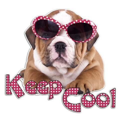 Wandsticker Hund, Sonnebrille, Keep Cool
