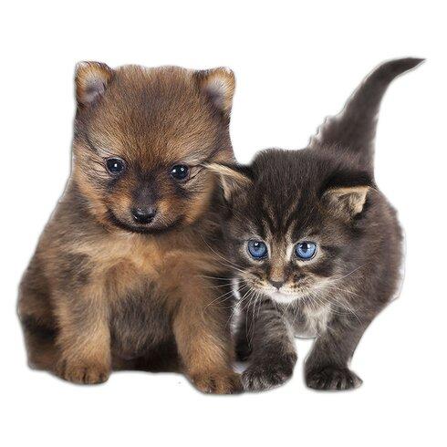 Wandsticker Hund Katze Baby